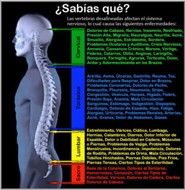 Los ejercicios para el adelgazamiento a los dolores en la espalda y